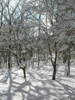 ホールのできから冬の森を