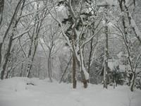 雪のゲストハウス