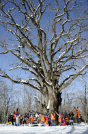 全員がミズナラに出会い、杉並木に出会い(写真:管洋介)
