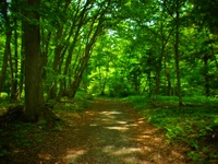 アファンの森の入り口