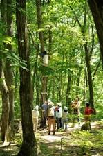 120801_心の森木のぼり2.JPG