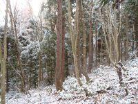 雪が積もった調査エリアの様子.JPG