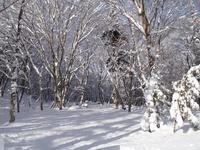 121211_除雪前の森の入口.JPG