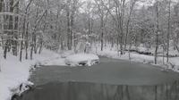 2011年3月18日の弥生池