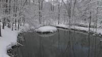 2012年3月19日の弥生池