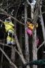 木登りは定番です。高さが変わると感覚も変わります。(撮影:ショウ)