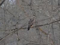 150401_bird2.JPG