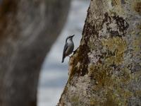 150401_bird3.JPG