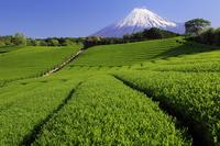 150413_aroma.jpg