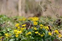 160406_springflowers01.JPG