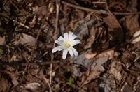 160406_springflowers02.JPG