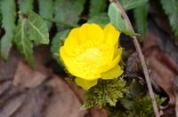 160406_springflowers03.JPG