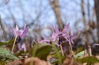 160406_springflowers04.JPG