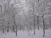 171227_winter01.JPG